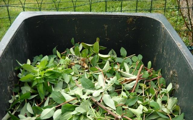葉っぱが入った生ごみ処理機